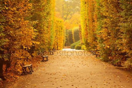 Фотообои Осенний парк аллея