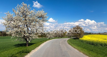 Фотообои Аллея и цветения вишни
