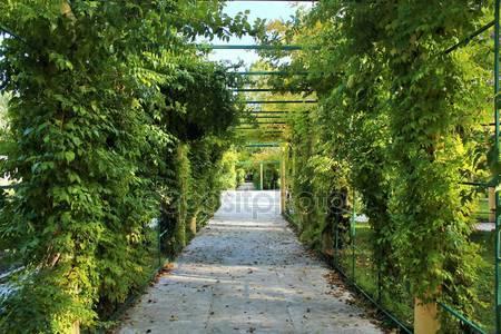 Фотообои Осень дикого винограда
