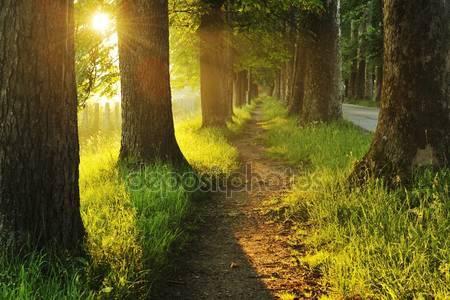 Восход солнца в красивой аллее