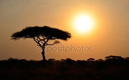 Фотообои Восходящее солнце в африке