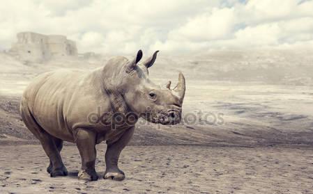 Фотообои Носорог в дикой природе