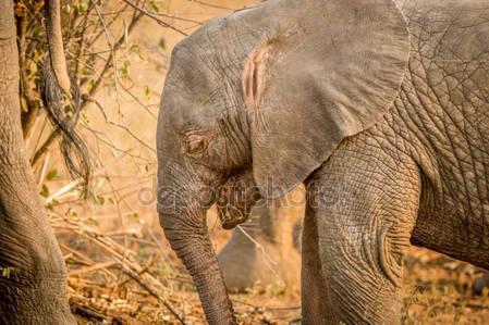 Фотообои Альбинос слон