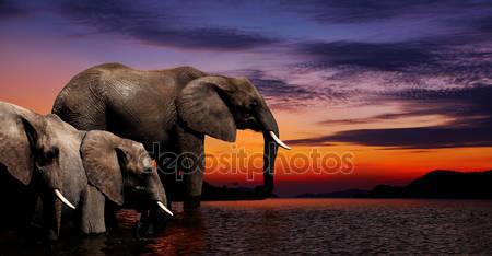 Фотообои Слон фантазия