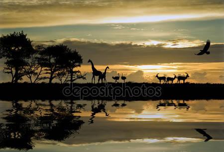 Красивые силуэты с прекрасным закат небо