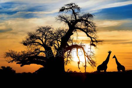 Жираф на африканской саванне