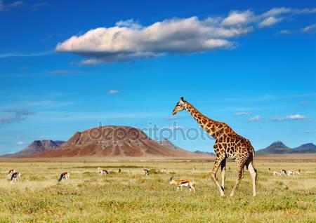 Фотообои Африканское сафари