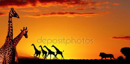 Концепция африканской природы