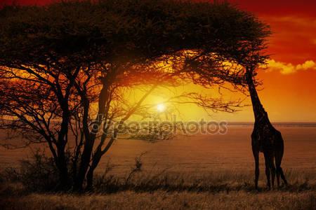 Африканский закат