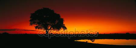 Фотообои Вид в танзании