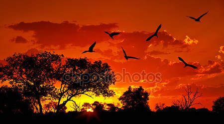 Ландшафт африки с теплым закатом
