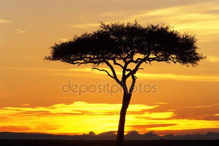 Фотообои Африка