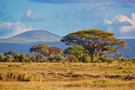 Ландшафт саванны в африке