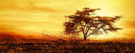 Фотообои Дерево на закате