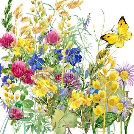 Фотообои Бабочки в цветах