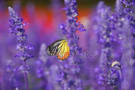 Фотообои Бабочка монарх