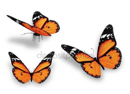 Три оранжевых бабочки