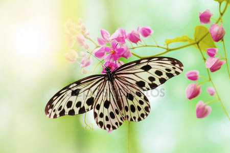 Фотообои Бабочка рисовой бумаги