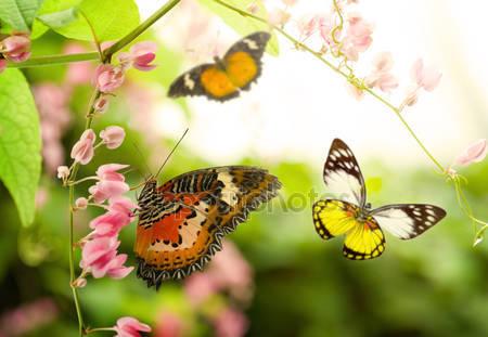 Фотообои Бабочки в летнее время