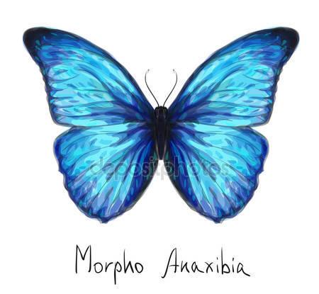 Фотообои Бабочка морфо анаксибия