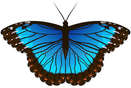 Фотообои Бабочка morpho