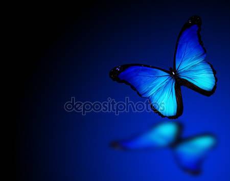 Фотообои Бабочка морфо на синем фоне