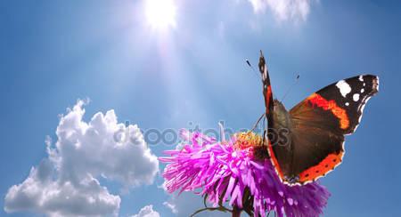 Фотообои Бабочка на цветке против неба