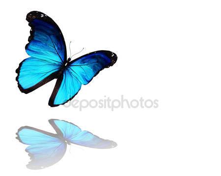 Фотообои Бабочка морфо синий