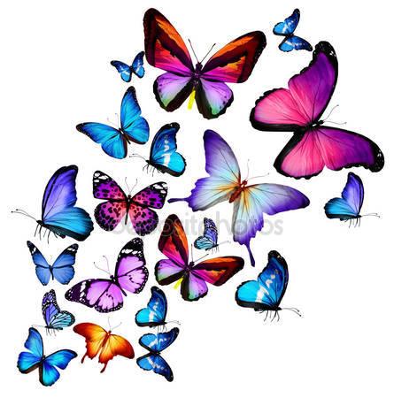 Много различных бабочек
