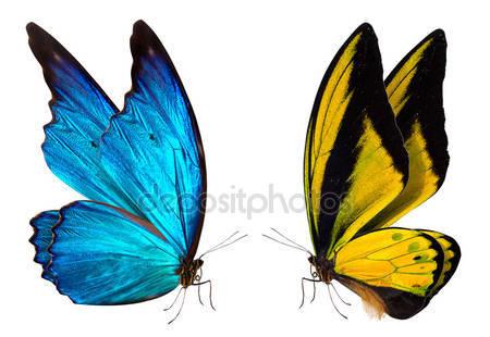 Бабочка макрос