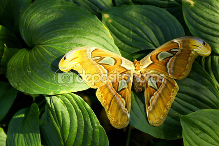 Фотообои Большие красочные бабочки