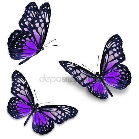Фиолетовая бабочка