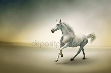 Фотообои Белая лошадь в движении