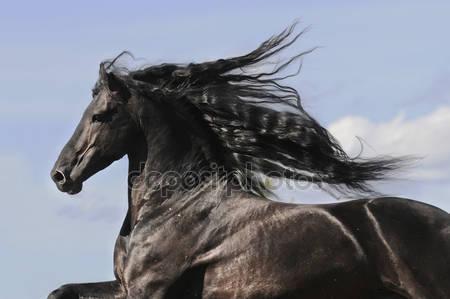 Портрет движущихся лошади