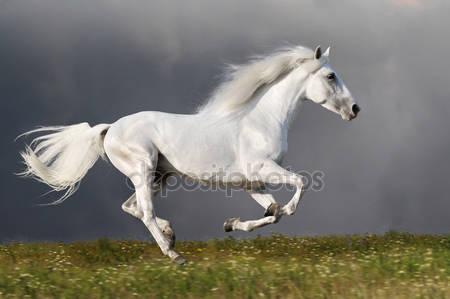 Фотообои Белая лошадь бежит на фоне темного неба