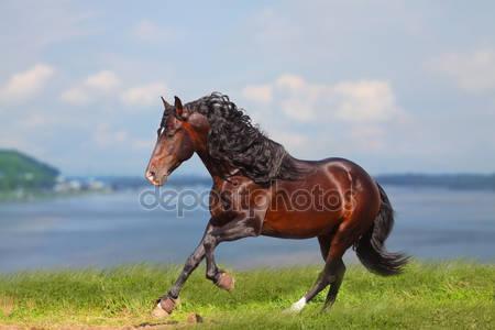 Лошадь около воды