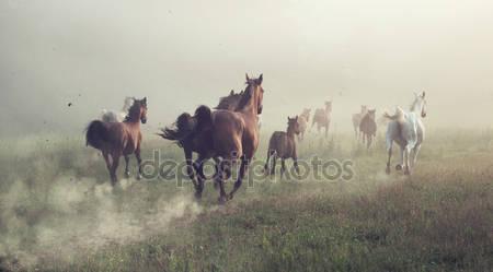 Фотообои Группы лошадей на лугу