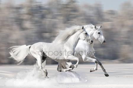 Две белые лошади зимой