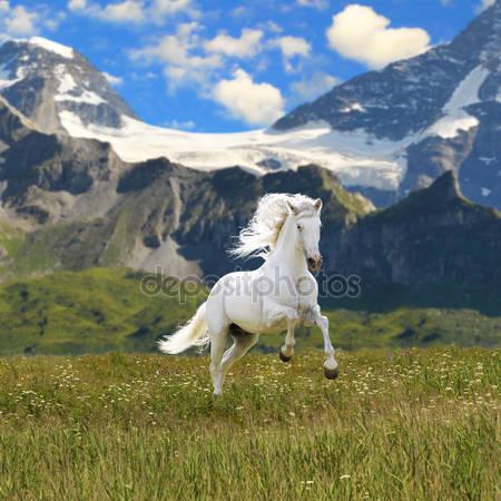 Фотообои Белая лошадь