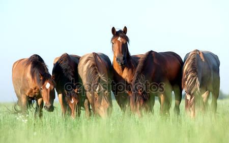 Молодые лошади едят траву в поле