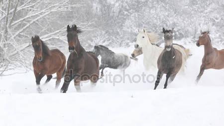 Партия лошадей