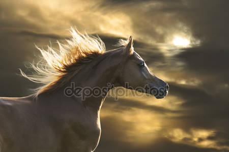 Красный конь бежит галоп в закат