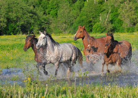 Лошадь бегает по воде