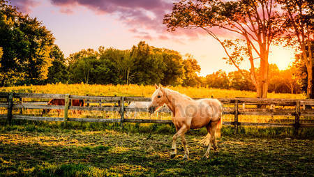 Паломино лошадей