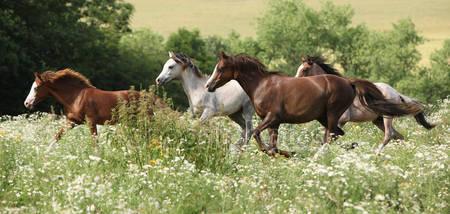 Партия коней бежит в лугу