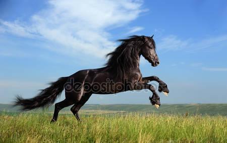 Красивый черный конь