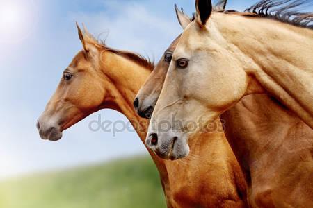 Чистокровные лошади