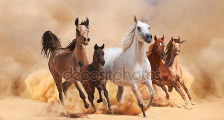 Лошади в песчаную пыль