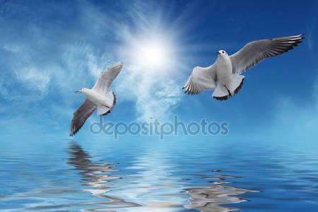 Фотообои Белые птицы