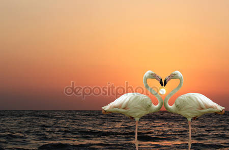 Фотообои Красивые и романтические фламинго